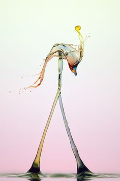 Flamingo by Markus Reugels, via 500px  One of my favorite photographers! It's amazing!