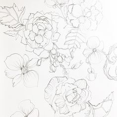 Majorly productive weekend ending with Begonias and Chinoiserie illustrations.  I'm so missing my watercolor palette and brushes but the last few weeks of intense drawing have brought me back to center and reminded me of the power of form and structure in my artwork.  #illustration #drawing #onebooktwobooks #patternlove #author #graphite