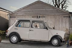 Martin Usborne: The Silence of Dogs in Cars: Miss Moss