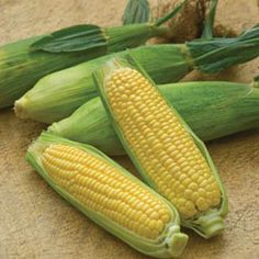 Sweetcorn Seeds ★ MIRIA MINI ★ Sweet Tasting Corn ★ theseedhouse ★ 50+ Seeds ★