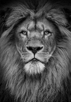 Aslan - I want a giant pictire of this in my room.