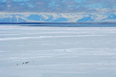 My friend is currently on a biological research trip in Antarctica and took this picture. - Imgur