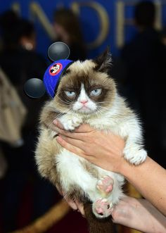 Grumpy Cat totally annoyed with 'Cinderella' world premiere /  'Modern Family' star Sarah Hyland, Grumpy Cat (ABI Images/Disney) March 2015 #Tard #GrumpyCat