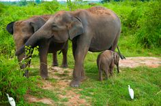 The Best Places to Safari in Sri Lanka - Luxury Escapes   Magazine