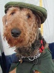 Must love Airedales