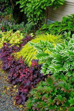 Beautiful shade border in Garden
