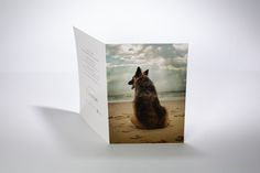 Shepherd on the beach, by K9 photography, light box photo