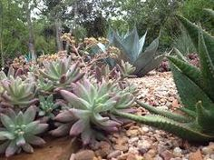 Image result for succulents in gardens