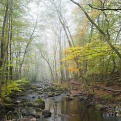 Stream in Swedish Beech Forest I -             Canvas Print & Canvas Art -           Photowall