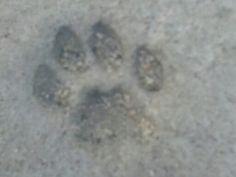 Łapka kotka... Wbita w beton