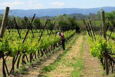 Landscapes of Provence serve as the perfect backdrop for photo ops throughout our Provence Tour! http://www.traveloffthebeatenpath.com
