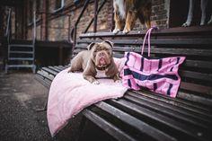 Ab Sofort, Matilda, Ps, Mint, Dog Leash, Just Go, Handbags, Grey, Photo Manipulation