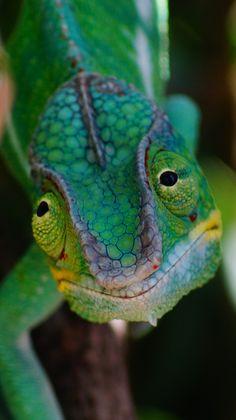 Chameleon in Paris by Diego Molero