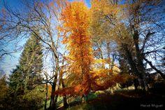 Above Aix Les Bains. Autumn 2015. Dans la montagne.