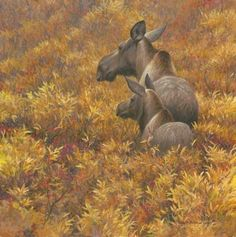 Robert Bateman Fall Forage Moose Cow and Calf s N Low on Internet | eBay