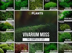 Complete List Of Vivarium Moss & Care Guide Tips - All For Herbs And Plants Types Of Moss, Types Of Plants, Growing Moss, Moss Plant, Peat Moss, Aquatic Plants, Freshwater Aquarium, Reptiles, Lizards