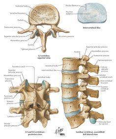 Lumbalgia: Composicion de la columna Lumbar