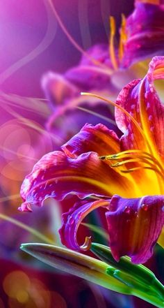 I keep seeing this color combination... I love it! Purple fading to orange-yellow...                                                                                                                                                                                 More
