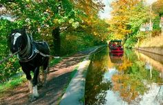 A gentle way to travel - Horse Drawn Canal Boats, Llangollen, Wales