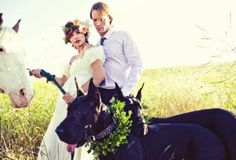 would love to have great danes in my wedding :) no horses though...
