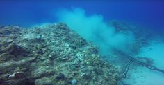 Government officials say the reef is zoned for cruise ship anchors even though it's illegal to damage coral in the Cayman Islands.