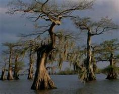 the manchac swamp a k a the haunted swamp near new orleans
