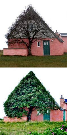 tree house or house tree?...