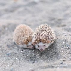 A Day In The Life of Amelia The Hedgehog   Best Of The Web | Design*Sponge