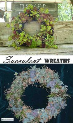 Succulent Wreaths - make your own fabulous garden or porch decor. Succulent Wreath, Succulent Care, Garden Crafts, Garden Art, Flower Beds, Cactus Flower, Cactus Y Suculentas, Landscaping With Rocks, How To Make Wreaths