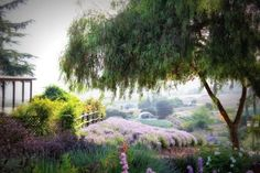 The Beautiful Lavender Farm Hiding In Plain Sight In Southern California That You Need To Visit