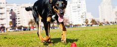 Jaké jsou ideální hračky pro psy?   Mazlíčkoviny