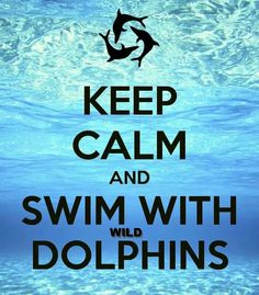 Keep Calm and Swim With WILD Dolphins! Join Dolphin Swim Australia for the experience of a lifetime :-)!!