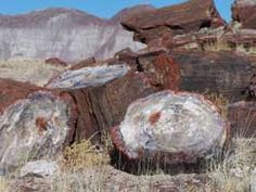 Petrified Forrest, petrified wood found in the park and the surrounding region is made up of almost solid quartz. Each piece is like a giant crystal, often sparkling in the sunlight as if covered by glitter. The rainbow of colors is produced by impurities in the quartz, such as iron, carbon, and manganese.
