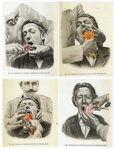 Lynn Skordal - Flower Torture (You Must Eat This Marigold).