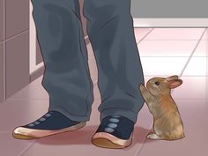 This website has great tips on how to do stuff like getting your rabbit to be comfortable around you,how to choose the right rabbit toy and much more!