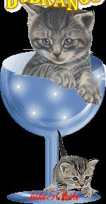 Wierszyki i gify na dobranoc: Gify na dobranoc kotki Gatos Cats, Gifs, Mom Son, Cat Pin, Cute Cats And Kittens, Funny Cats, Bubble, Friends, Good Morning Wishes