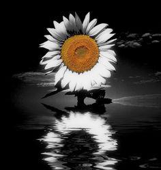©2012GuySalem Photo Manipulation, Great Photos, Beautiful Things, Butterflies, My Favorite Things, Dandelion, Guy, My Arts, Colours