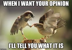 When I want your #opinion I'll give it to you #LetsGetWordy