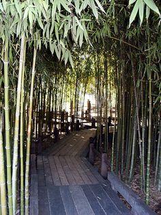 Huntington Library Japanese Bamboo Garden Bridge 0053 by DominusVobiscum, via Flickr