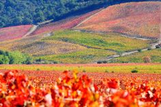 Lapostolle Apalta Vineyard in Santa Cruz - Colchagua Valley, Chile. #pinterest-Colchagua-tours
