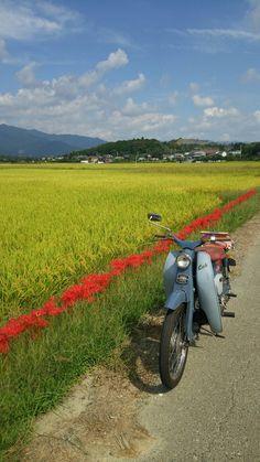 Vintage Honda Motorcycles, Custom Motorcycles, Cars And Motorcycles, Honda Cub, Honda Motors, Mini Bike, Cool Bikes, Vintage Japanese, Motorbikes
