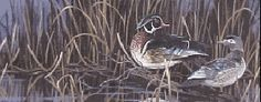 Wood Ducks. Oil Painting. (Cassandra Graham) Wildlife Paintings, Ducks, Graham, Oil, Animals, Animales, Animaux, Animal, Animais