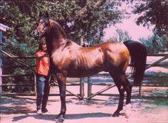 Fadjur's page - Jack Tone Ranch-Arabian