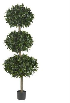 69'' Sweet Bay Triple Ball Tree 69'' Sweet Bay Triple Ball Tree by DSD. $733.50. Picture may wrongfully represent. Please read title and description thoroughly.. This product may be prohibited inbound shipment to your destination.. Please refer to SKU# ATR25197386 when you inquire.. Shipping Weight: 11.00 lbs. Brand Name: DSD Mfg#: 1067058. 69'''' Sweet Bay Triple Ball Tree. Three times the beauty, three times the fun! This lively Ball Topiary stands a full 69 ...