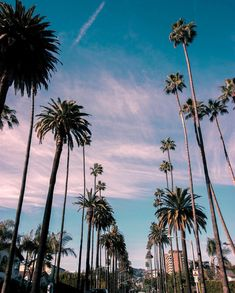 20 ideas for photography summer city los angeles Los Angeles Wallpaper, Beautiful World, Beautiful Places, California Dreamin', California Palm Trees, Los Angeles California, Aesthetic Wallpapers, Summer Vibes, Places To Travel
