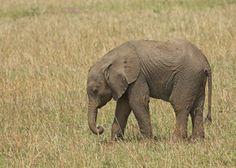 Stella The Elephant