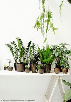 urban jungle at home