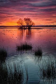 Incredible sunset  ~ National Wildlife Refuge, California