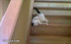 階段の降り方が怠け者すぎるネコ : あごひげ海賊団