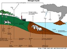 Nitrogen Cycle - The Environmental Literacy Council diagram expalining the nitrogen cycle
